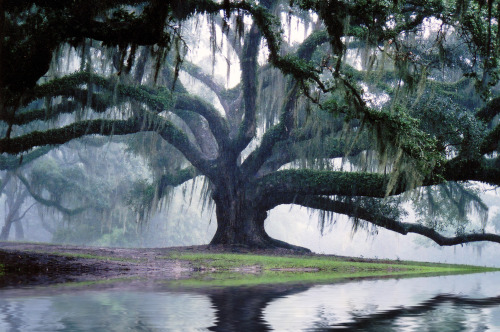 Oak Tree on water